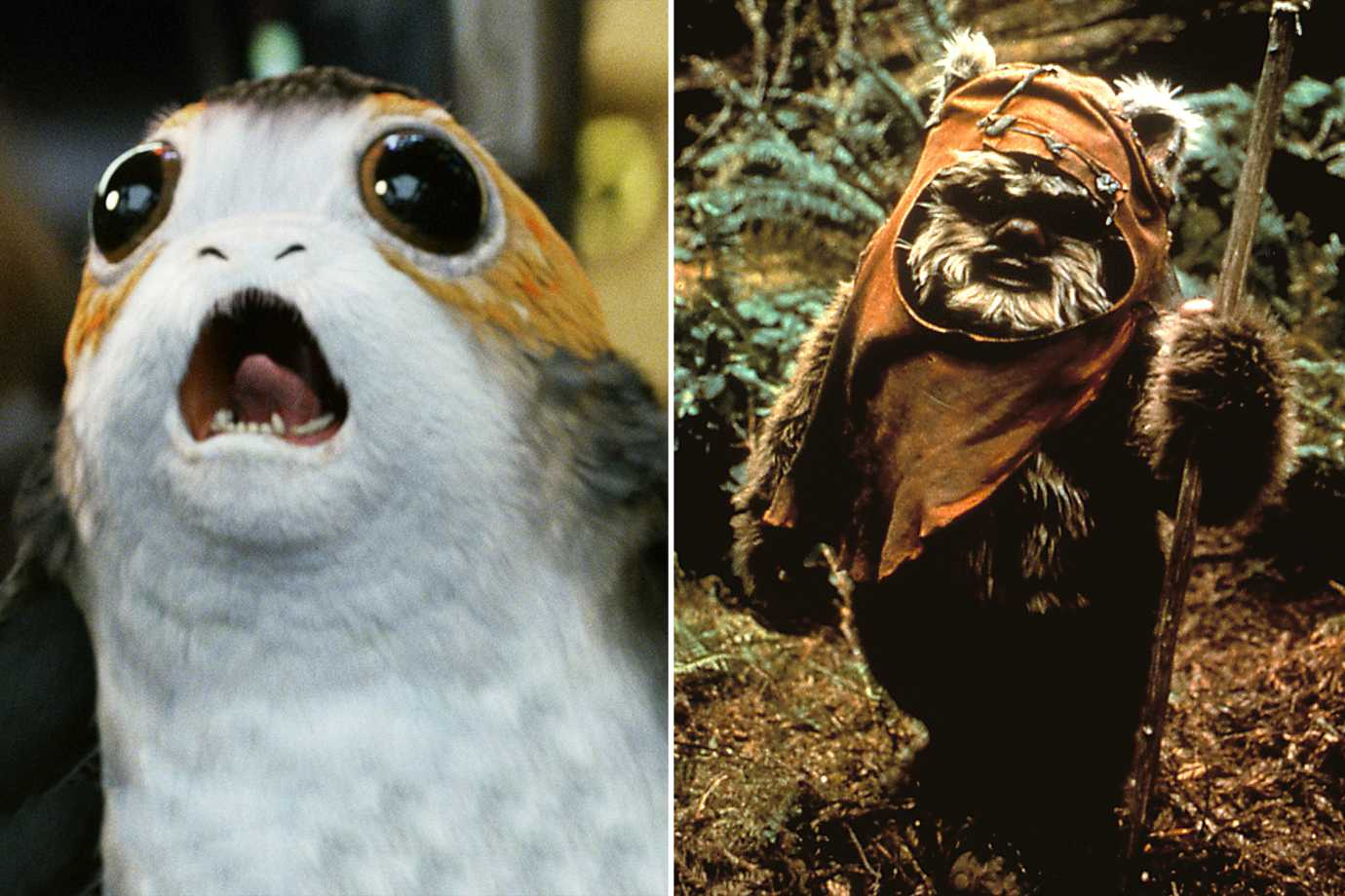 Picture of a porg, and ewok, from Star Wars